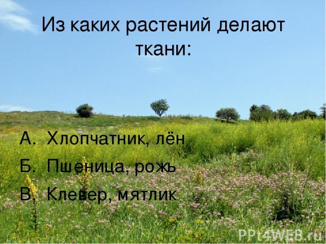 Из каких растений делают ткани: А. Хлопчатник, лён Б. Пшеница, рожь В. Клевер, мятлик