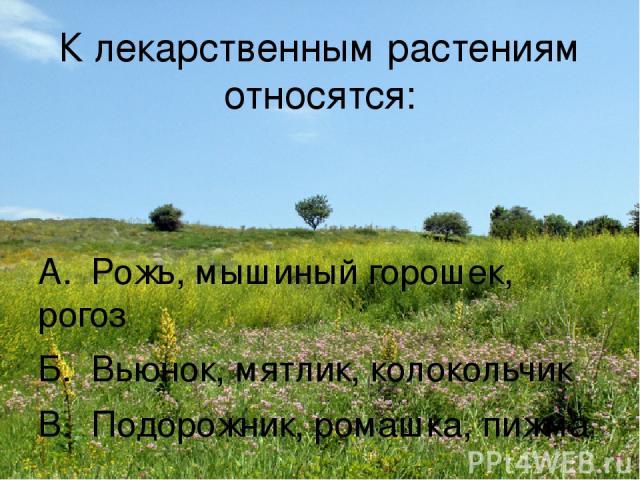 К лекарственным растениям относятся: А. Рожь, мышиный горошек, рогоз Б. Вьюнок, мятлик, колокольчик В. Подорожник, ромашка, пижма