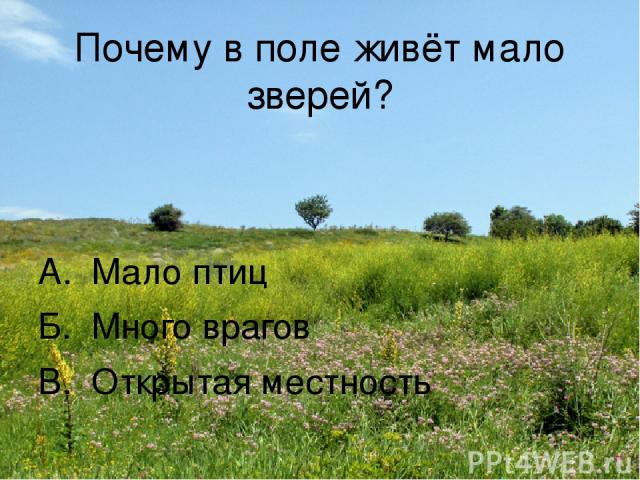 Почему в поле живёт мало зверей? А. Мало птиц Б. Много врагов В. Открытая местность