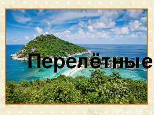 Интернет-источники http://www.symbolsbook.ru/Article.aspx?id=452 соловей http://