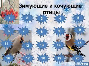 выход Зимующие и кочующие птицы 8 7 6 15 14 13 12 11 16 10 4 5 3 2 1 9 17 18 19