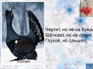 Вот птичка так птичка, Не дрозд, не синичка, Не лебедь, не утка И не козодой. Но
