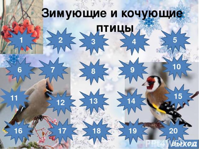 выход Зимующие и кочующие птицы 8 7 6 15 14 13 12 11 16 10 4 5 3 2 1 9 17 18 19 20