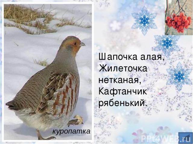 Очень красивый лесной петушок: Красные брови, как гребешок, Хвостик косицами, чёрные перья, Любит весною танцы, веселье. Песни поёт, говорят, что токует. Знаешь ли птицу такую? Тетерев