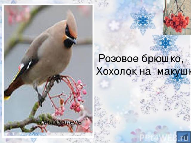 Шапочка алая, Жилеточка нетканая, Кафтанчик рябенький. куропатка