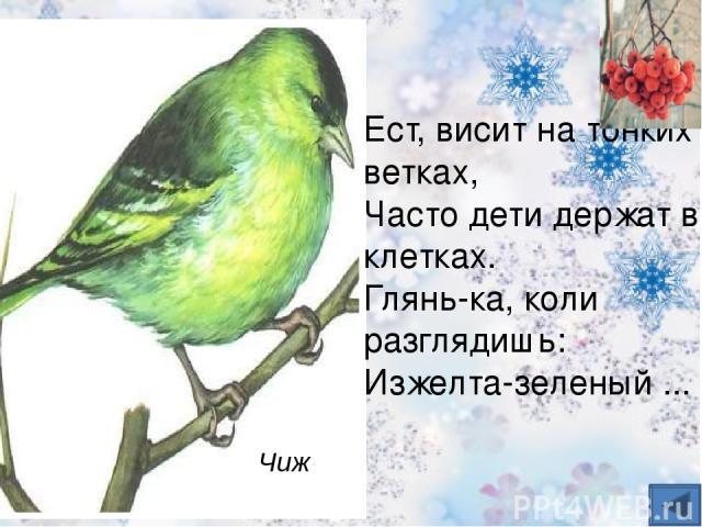 На репье он очень ловко Треплет цепкие головки, Сыплет семечки на пол Птичка бойкая ... щегол
