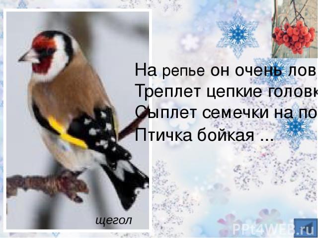 Это многочисленные гости с севера, появляются осенью. Отличительный признак – сдвинутая на лоб малиново- красная шапочка. Такой же оттенок украшает и грудь самцов. Семена берёзы, ольхи и ели – прекрасный корм для птиц. чечётка