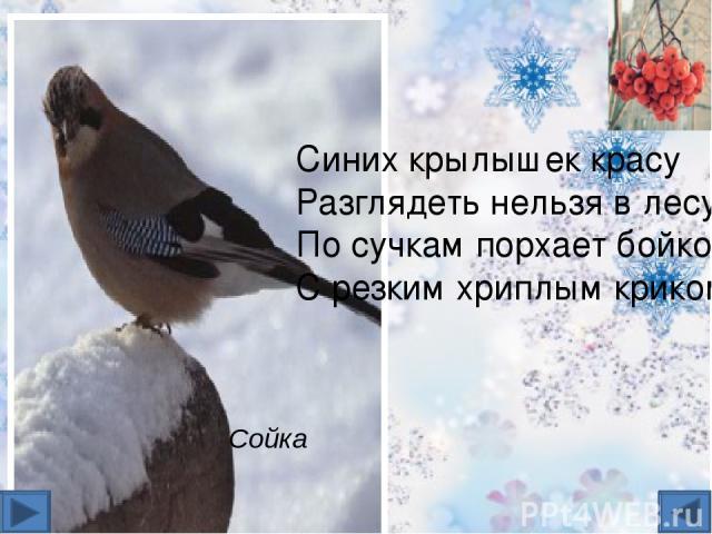 источники http://kartravel.ru/dyatels.html- дятел http://turizm.lib.ru/c/chuksin_n/local_t.shtml- дрозд, лазоревка http://priroda2011.ucoz.ru/photo/pticy_nashego_kraja/zimujushhie_pticy/10- куропатка, ворон :http://dikiymir.ru/catalog-statei/ptica/…