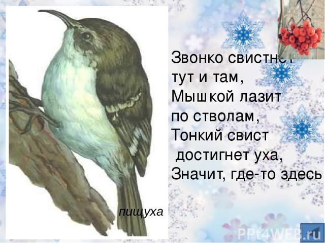 Чернокрылый, красногрудый, И зимой найдет приют: Не боится он простуды – С первым снегом Тут как тут! Снегирь
