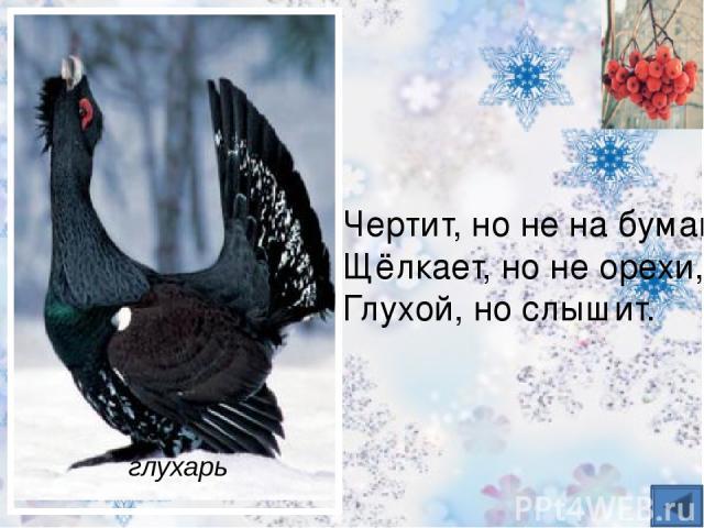 Вот птичка так птичка, Не дрозд, не синичка, Не лебедь, не утка И не козодой. Но эта вот птичка, Хоть и невеличка, Выводит птенцов Только лютой зимой. клёст