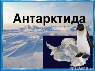 альбатрос морж ледяная рыба треска тюлень морской леопард белый медведь поморник