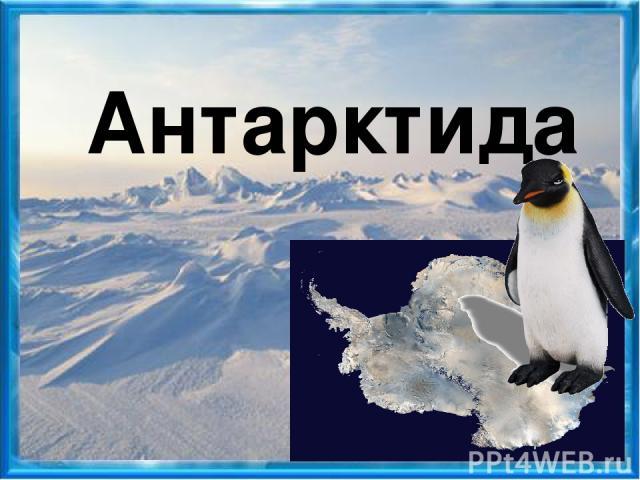 альбатрос морж ледяная рыба треска тюлень морской леопард белый медведь поморник пингвин