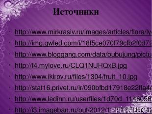Источники http://www.mirkrasiv.ru/images/articles/flora/lychee/lychee-008.jpg ht