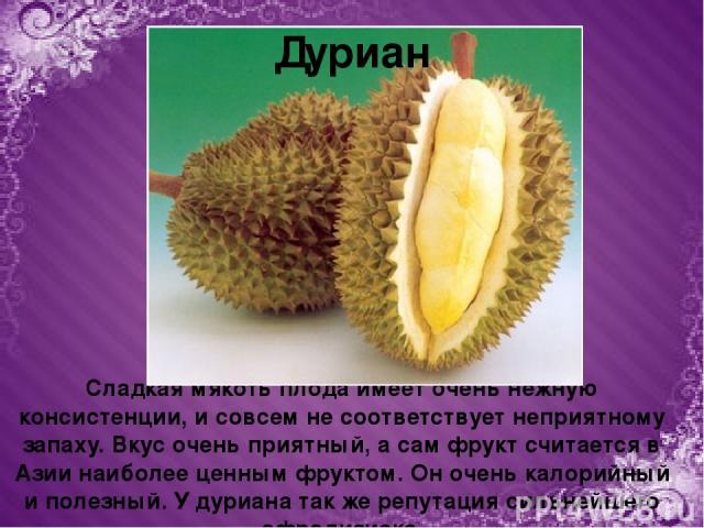 Сладкая мякоть плода имеет очень нежную консистенции, и совсем не соответствует неприятному запаху. Вкус очень приятный, а сам фрукт считается в Азии наиболее ценным фруктом. Он очень калорийный и полезный. У дуриана так же репутация сильнейшего афр…