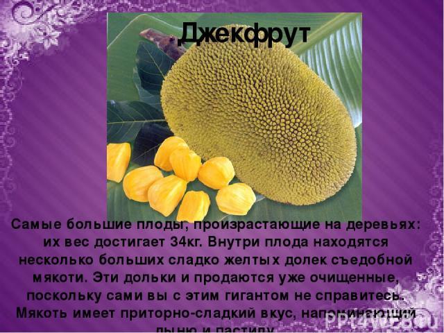 Джекфрут Самые большие плоды, произрастающие на деревьях: их вес достигает 34кг. Внутри плода находятся несколько больших сладко желтых долек съедобной мякоти. Эти дольки и продаются уже очищенные, поскольку сами вы с этим гигантом не справитесь. Мя…