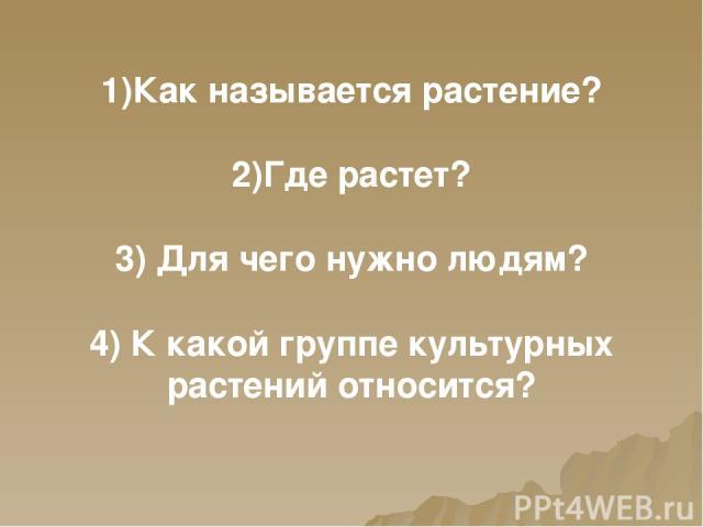 1)Как называется растение? 2)Где растет? 3) Для чего нужно людям? 4) К какой группе культурных растений относится?