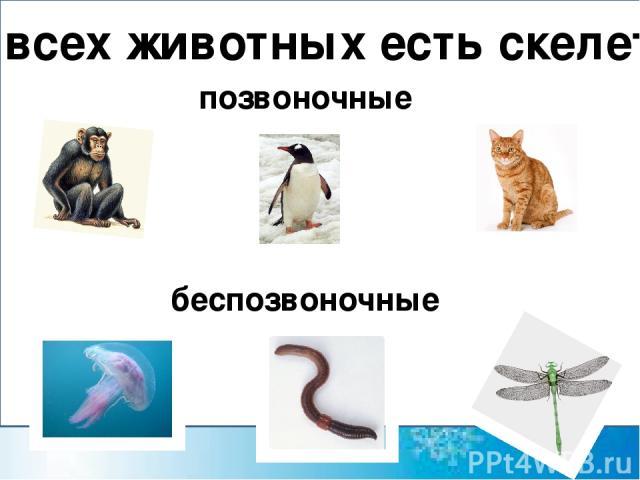 У всех животных есть скелет? позвоночные беспозвоночные