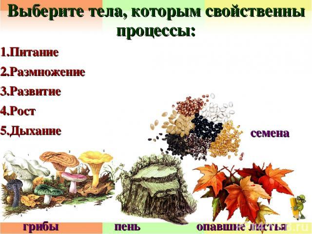 Выберите тела, которым свойственны процессы: 1.Питание 2.Размножение 3.Развитие 4.Рост 5.Дыхание грибы пень опавшие листья семена