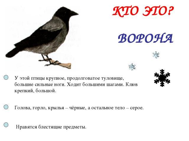 ВОРОНА КТО ЭТО? У этой птицы крупное, продолговатое туловище, большие сильные ноги. Ходит большими шагами. Клюв крепкий, большой. Голова, горло, крылья – чёрные, а остальное тело – серое. Нравятся блестящие предметы.