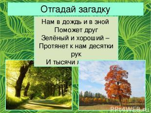 Отгадай загадку Нам в дождь и в зной Поможет друг Зелёный и хороший – Протянет к