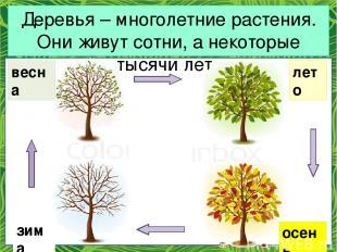 Деревья – многолетние растения. Они живут сотни, а некоторые тысячи лет. зима ве
