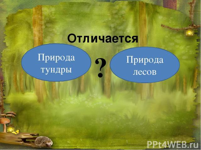 Природа тундры Природа лесов ? Отличается