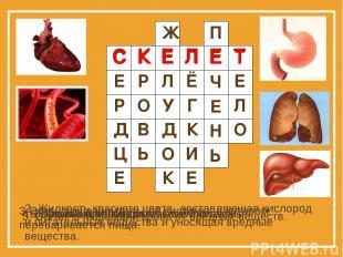 1. Главный орган кровеносной системы. 2. Жидкость красного цвета, доставляющая к