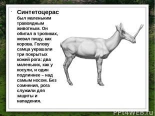 Синтетоцерас был маленьким травоядным животным. Он обитал в тропиках, жевал пищу