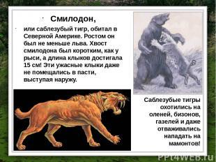 Смилодон, или саблезубый тигр, обитал в Северной Америке. Ростом он был не меньш