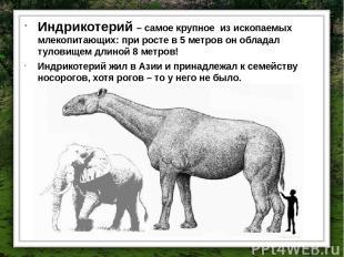 Индрикотерий – самое крупное из ископаемых млекопитающих: при росте в 5 метров о