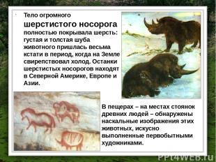 Тело огромного шерстистого носорога полностью покрывала шерсть: густая и толстая