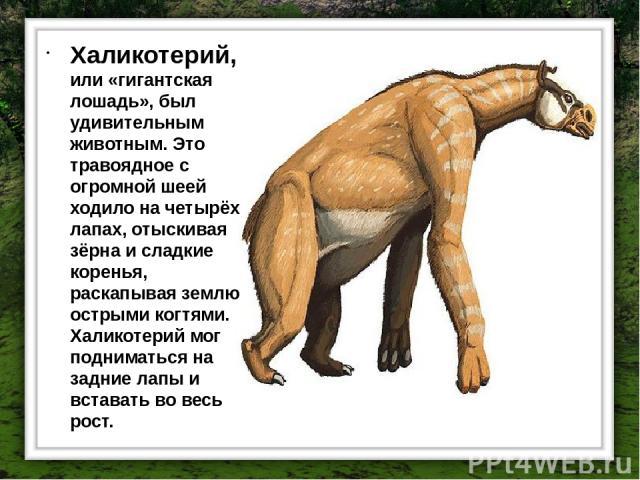 Халикотерий, или «гигантская лошадь», был удивительным животным. Это травоядное с огромной шеей ходило на четырёх лапах, отыскивая зёрна и сладкие коренья, раскапывая землю острыми когтями. Халикотерий мог подниматься на задние лапы и вставать во ве…