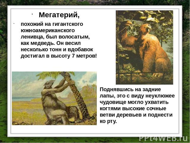 Мегатерий, похожий на гигантского южноамериканского ленивца, был волосатым, как медведь. Он весил несколько тонн и вдобавок достигал в высоту 7 метров! Поднявшись на задние лапы, это с виду неуклюжее чудовище могло ухватить когтями высокие сочные ве…