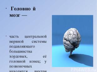 Головно й мозг — часть центральной нервной системы подавляющего большинства хорд