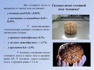 Сколько весит головной мозг человека? Вес головного мозга в процентах от массы т