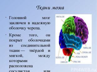 Ткани мозга Головной мозг заключен в надежную оболочку черепа. Кроме того, он по