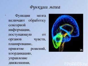 Функции мозга Функции мозга включают обработку сенсорной информации, поступающую