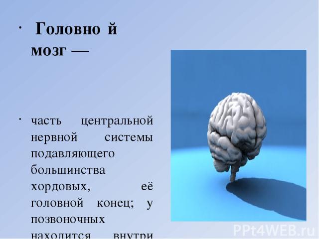 Головно й мозг — часть центральной нервной системы подавляющего большинства хордовых, её головной конец; у позвоночных находится внутри черепа. Наиболее крупные размеры имеет головной мозг млекопитающих отрядов китообразные, хоботные, приматы. Наибо…