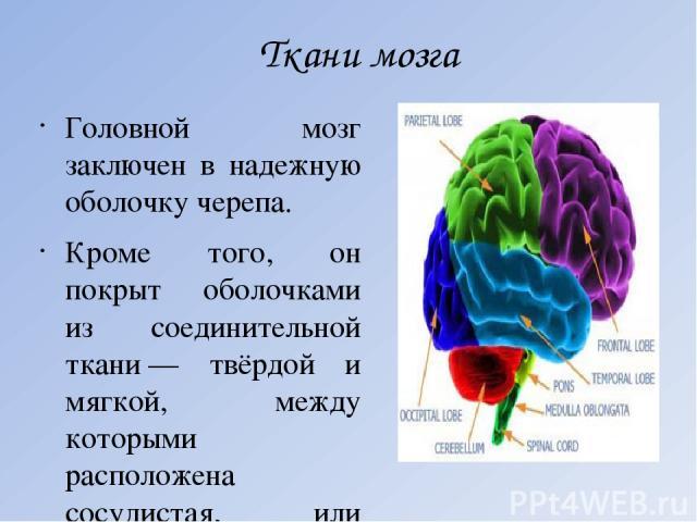 Ткани мозга Головной мозг заключен в надежную оболочку черепа. Кроме того, он покрыт оболочками из соединительной ткани— твёрдой и мягкой, между которыми расположена сосудистая, или паутинная оболочка. Между оболочками и поверхностью головного и сп…