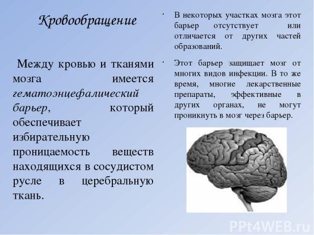 Кровообращение В некоторых участках мозга этот барьер отсутствует или отличается от других частей образований. Этот барьер защищает мозг от многих видов инфекции. В то же время, многие лекарственные препараты, эффективные в других органах, не могут …