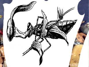 Личинка (нимфа) стрекозы – наяда – прячется на дне, маскируясь под цвет ила. Про