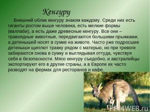 Кенгуру Внешний облик кенгуру знаком каждому. Среди них есть гиганты ростом выше