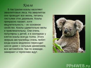Коала В Австралии коалы населяют эвкалиптовые леса. На эвкалиптах они проводят в