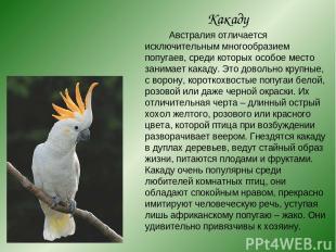 Какаду Австралия отличается исключительным многообразием попугаев, среди которых