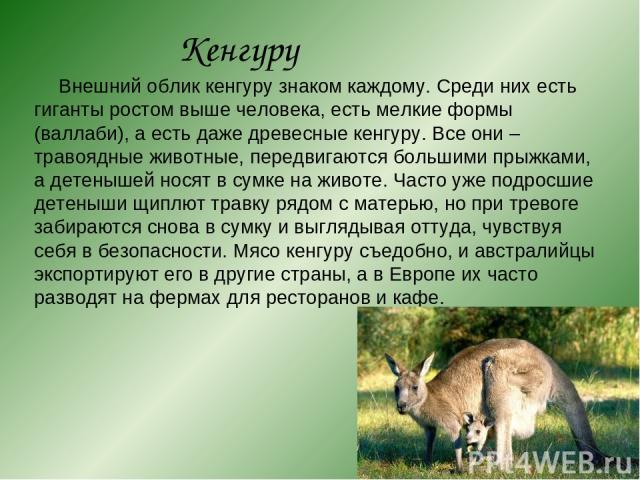 Кенгуру Внешний облик кенгуру знаком каждому. Среди них есть гиганты ростом выше человека, есть мелкие формы (валлаби), а есть даже древесные кенгуру. Все они – травоядные животные, передвигаются большими прыжками, а детенышей носят в сумке на живот…