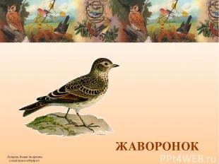 ЖАВОРОНОК Лазарева Лидия Андреевна e-mail:lazareva@pdps.lv