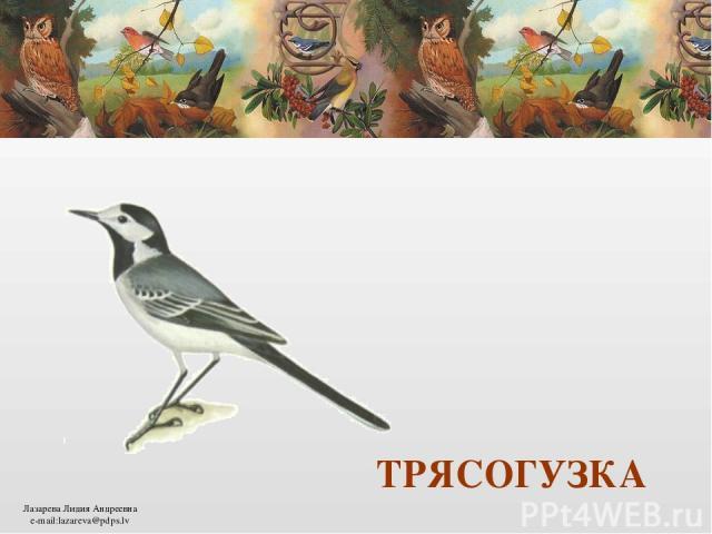 ТРЯСОГУЗКА Лазарева Лидия Андреевна e-mail:lazareva@pdps.lv