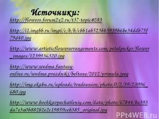 Источники: http://flowers.forum2x2.ru/t37-topic#283 http://i1.imgbb.ru/img6/c/b/