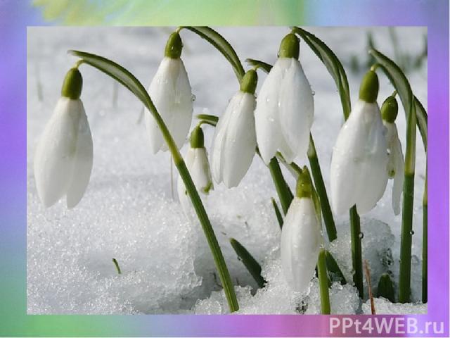 Богиня Флора раздавала цветам костюмы для карнавала и подарила подснежнику кипельно белый. Но снег тоже захотел принять участие в карнавале, хоть наряд ему не полагался. И он стал просить цветы поделиться с ним одеянием. Цветы, боясь холода, не откл…