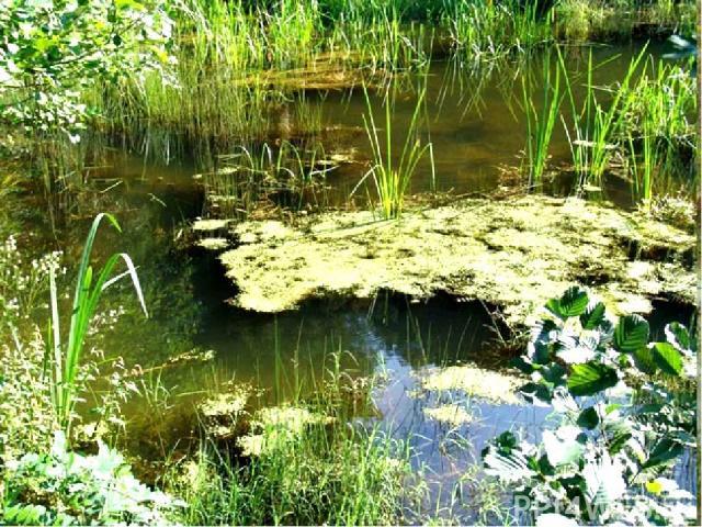 На берегах озёр вырастает трава, кустарники, деревья. Год от года ручейки и реки наносят в озеро ил, глину, песок, камешки. Постепенно вода в озере зарастает мхом и превращается в болото.